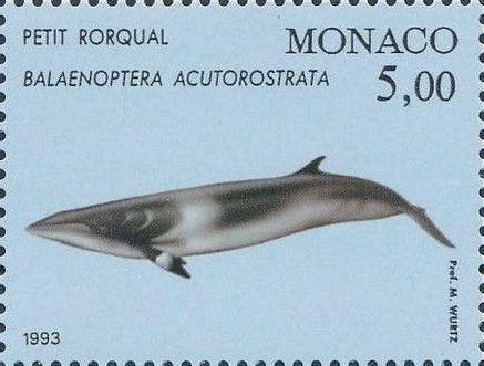 Monaco 1993 Musée Océanographique - Cétacés de la Méditerranée (2nd Group) b.jpg