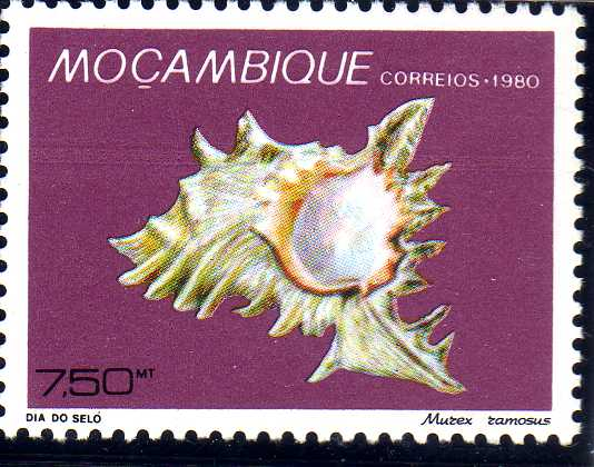 Mozambique 1980 Stamp Day - Maritime Shells of Mozambique f.jpg
