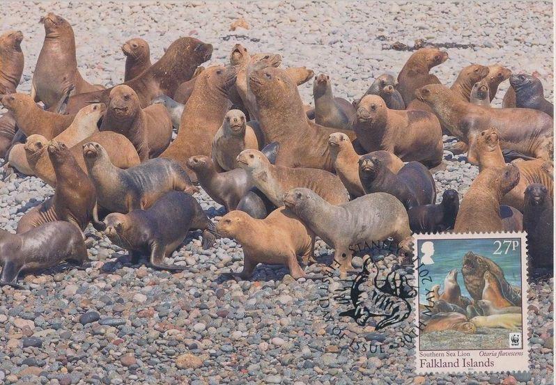 Falkland Islands 2011 WWF - The Southern Sealion MCa.jpg