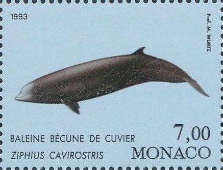 Monaco 1993 Musée Océanographique - Cétacés de la Méditerranée (2nd Group) d.jpg