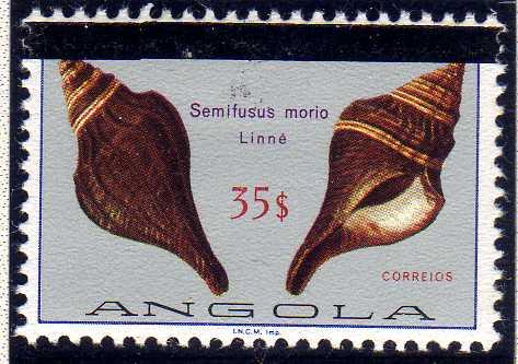 Angola 1981 Sea Shells Overprinted l.jpg