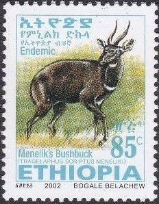 Ethiopia 2002 Menelik's Bushbuck q.jpg