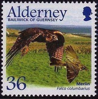 Alderney 2002 Migrating Birds Part 1 Raptors c.jpg