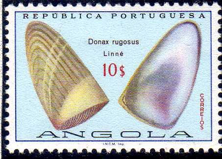Angola 1974 Sea Shells 0.jpg