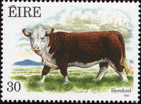 Ireland 1987 Irish Cattle c.jpg