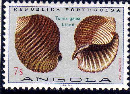 Angola 1974 Sea Shells n.jpg