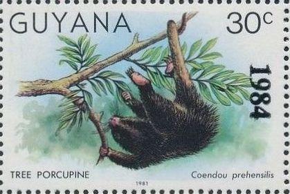 Guyana 1984 Wildlife (Overprinted 1984) a.jpg
