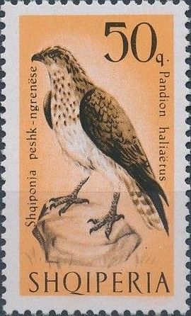Albania 1966 Birds of Prey f.jpg