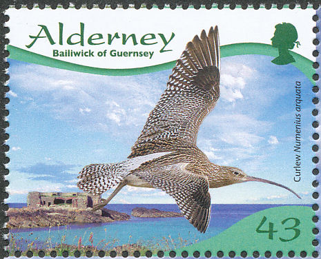 Alderney 2009 Resident Birds Part 4 (Waders) b.jpg