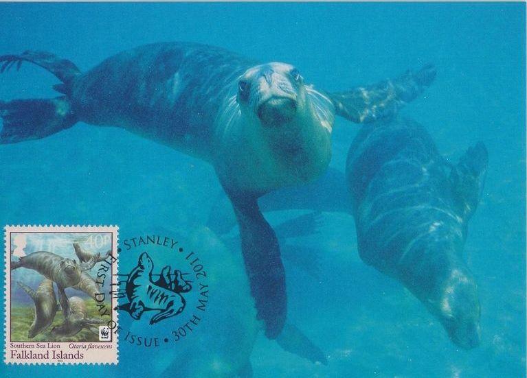 Falkland Islands 2011 WWF - The Southern Sealion MCb.jpg