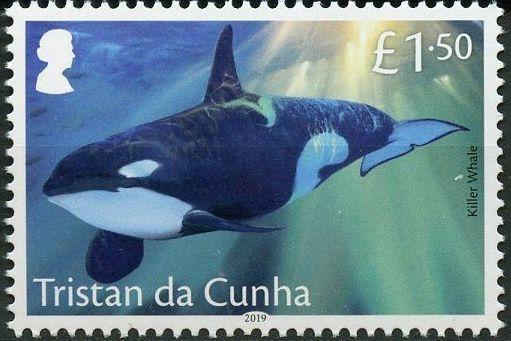 Tristan da Cunha 2019 Marine Mammals d.jpg