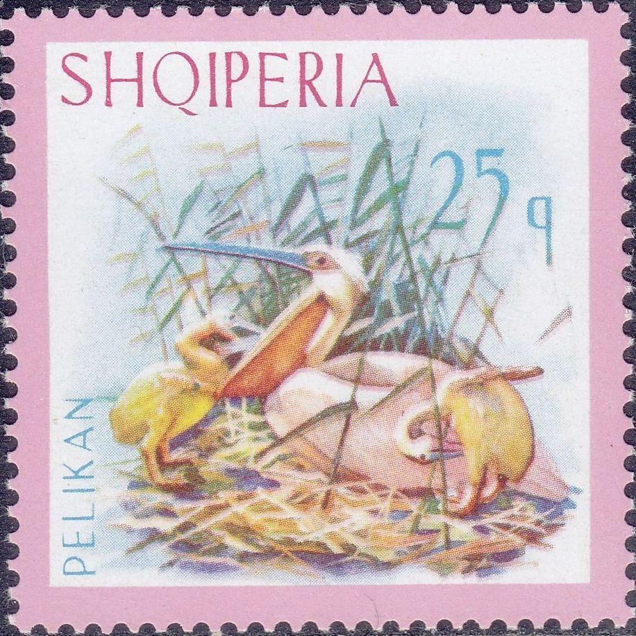 Albania 1967 Dalmatian Pelican d.jpg