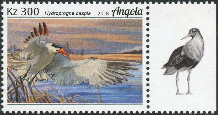 Angola 2018 Wildlife of Angola - Water Birds b.jpg