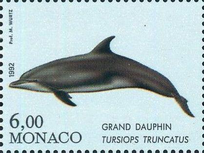 Monaco 1992 Musée Océanographique - Cétacés de la Méditerranée (1st Group) c.jpg