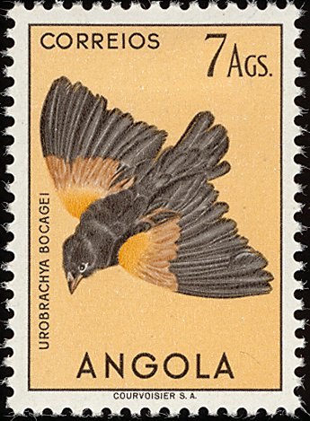Angola 1951 Birds from Angola p.jpg