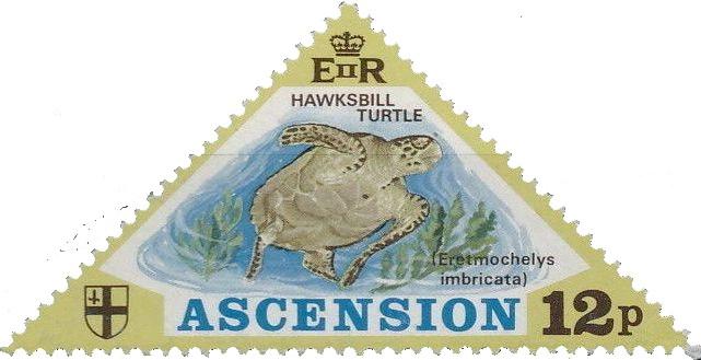 Ascension 1973 Turtles c.jpg