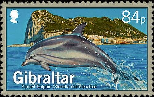 Gibraltar 2014 Dolphins b.jpg