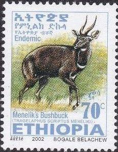 Ethiopia 2002 Menelik's Bushbuck n.jpg