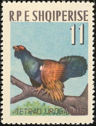 Albania 1963 Birds d.jpg