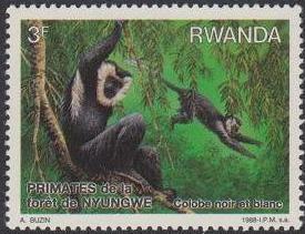 Rwanda 1988 Primates of Nyungwe Forest b.jpg