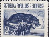 Albania 1961 Native Animals