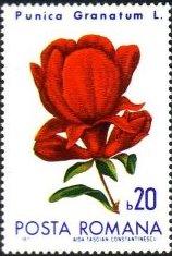 Romania 1971 Flowers from Botanical Garden