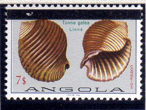 Angola 1981 Sea Shells Overprinted n.jpg