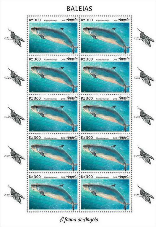 Angola 2018 Wildlife of Angola - Whales Sd.jpg