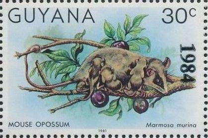 Guyana 1984 Wildlife (Overprinted 1984) j.jpg