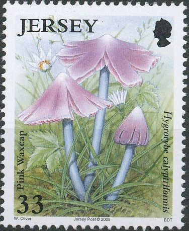 Jersey 2005 Nature - Fungi II