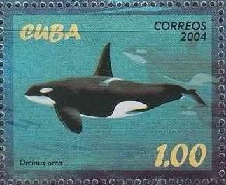 Cuba 2004 Marine Mammals f.jpg