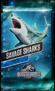 Savage Sharks Pack