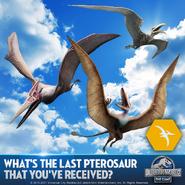 Pterosaurs Promo