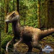 Velociraptor Promo