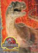 Unnamed raptor