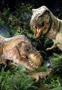 Rex forms