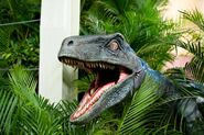 Blue-at-Raptor-Encounter-Universal-Studios-5 preview