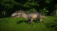Medium Allosaurus