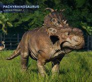 Pachyrhinosaurs jwe fanmade