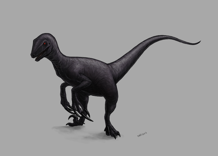 Excavaraptor