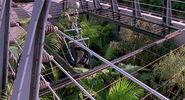 Une vache est placé dans la Clôture des Raptors