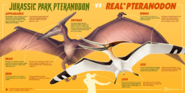 Jurassic Park Pteranodon vs Real Pteranodon