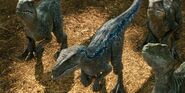 Jurassicvault JW 4kHD 066