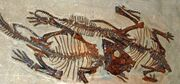 レプトケラ 化石.jpg