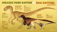 Jurassic Park Raptor vs Real Raptors