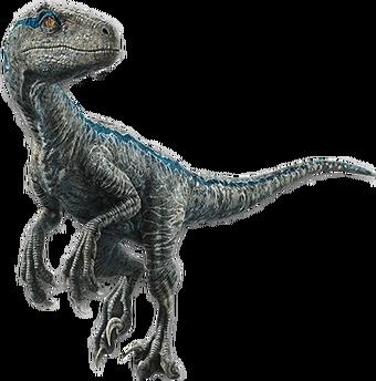 Velociraptor Jurassic Park Wiki Fandom Top 7 dinosaurios raptores mas peligrosos y letales de la prehistoria. velociraptor jurassic park wiki fandom