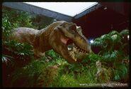 Rex tlw