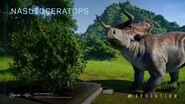 Nasuoceratops jwwe