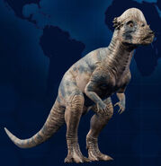 PachycephalosaurusMain