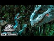 Jurassic World - Tracking Indominus Rex With a Pack of Velociraptors in 4K HDR
